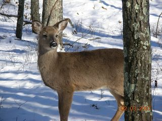Bushkill chalet photo - daily visitors!
