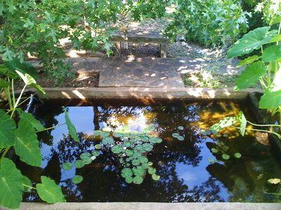 Meditation pond with Koi fish