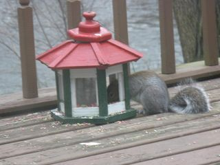 Carlisle cabin photo - Squirrels don't respect the boundaries!