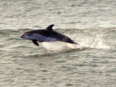 Like dolphins in the sea, jump at your swell chance for a great vacation rental.