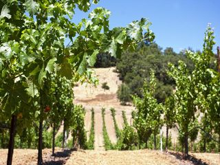 Healdsburg estate photo - Our vineyard