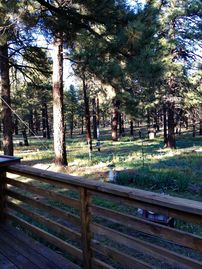 Parks house rental - Cozy with a view, camping in the Kaibab forest never felt so good.