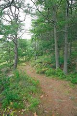 Georgetown studio photo - Hiking Trail on western shore of our 1/2 mile long peninsula