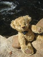 The VRBO Bear relaxing on the Big Thompson River