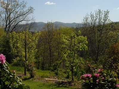 View of mountains and fruit trees right outside of front patio.