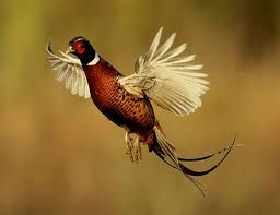 Upland birds and waterfowl are abundant in the valley.