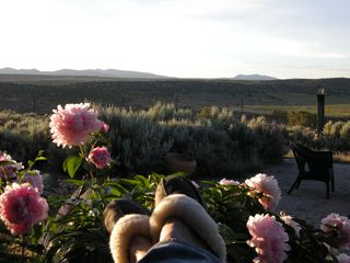 Taos house photo - Evening View of Countryside through Back Garden Peonies in Early Summer.