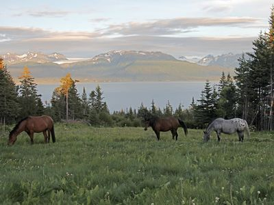 Horses grazing nearby