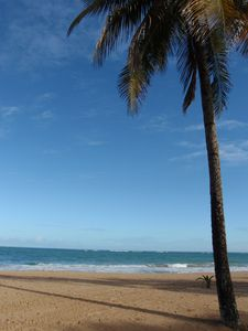 Relax Under the Palm Trees of Condado Beach