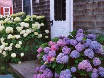 Nantucket Town house rental - Front entrance at high season