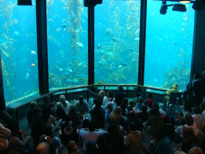 Visit the amazing Monterey Bay Aquarium!