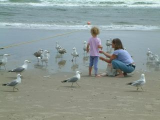 Ogunquit house photo - Feeding the gulls