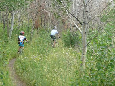 Mountain Biking trails nearby. Ride or put bike on free bus-all levels of trails