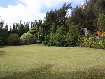 croquet lawn and coffee trees