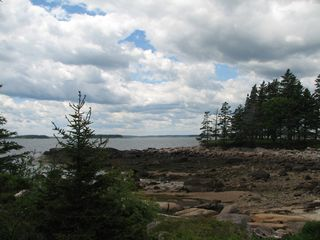Beals - Great Wass Island cabin photo - Ocean view. Spruce point. Great place to beachcomb.