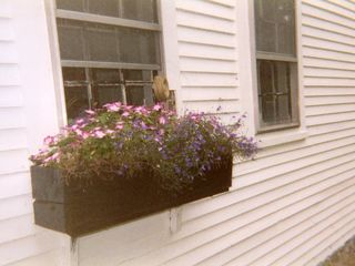 Plymouth house photo - Kitchen window box