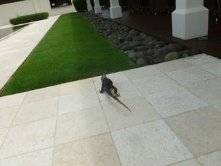 Playa Conchal condo photo - A visitor at the beach club
