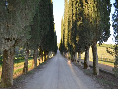 Cypress alley on historic estate