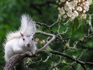 Cashiers estate photo - Rare White Squirrel in Stonefly