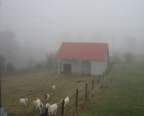 Lost River farmhouse photo - Resident goats early one misty morning
