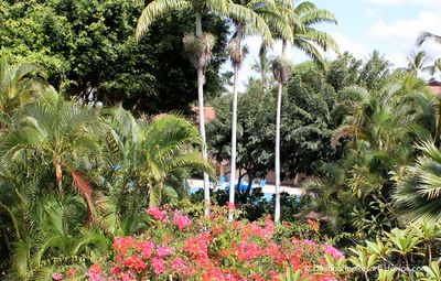 View your nearest swimming pool from the same side lanai.