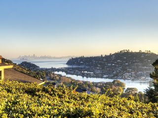 The back yard view during the day. - Tiburon house vacation rental photo