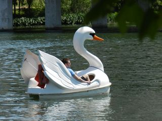 Austin cottage photo - Rent a Swan Boat on the Lake Less Than A Mile From the House