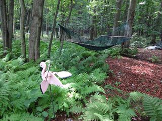 Stanfordville cottage photo - hammock in back woods