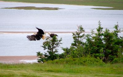 Bald eagles sit on one of the trees on the property. Bring your camera!