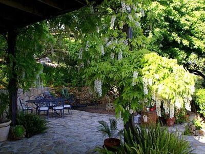 Wisteria Blooming on the Stone Terrace in March