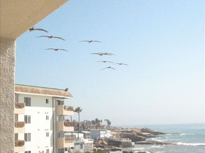 A common sight is the prehistoric pelicans as they glide by the balcony