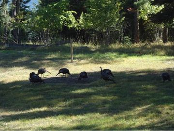 Wild turkeys pay a visit. Fun to observe from the deck!