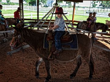 Westgate River Ranch - Pony Rides