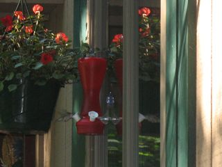 Burnsville cabin photo - Hummingbirds at Window!