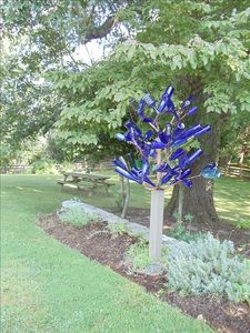 Ask about the tale of the blue bottle tree in the owner's garden.