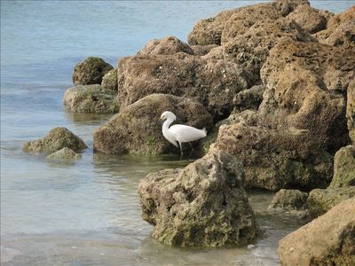 Egrets and other exotic birds share the Beach Club with us