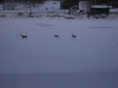 Watch the deer on the lake as dusk falls