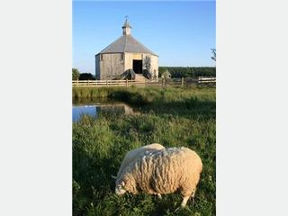 Lunenburg cottage photo - Sheep and historic barn