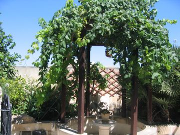 Vine gazebo with turtle pond at the back