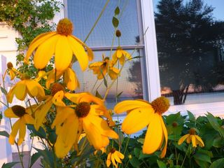 Hampton Bays house photo - Sunflowers, beach reflection