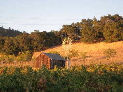 Windmill in zin vineyard at sunset -- picture perfect!