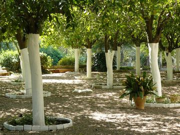 Enjoy a fresh shadow by the orange trees garden