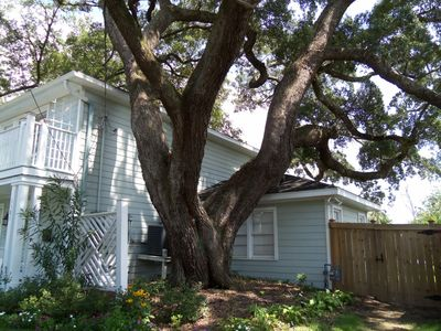 Giant Live Oaks surround the house.