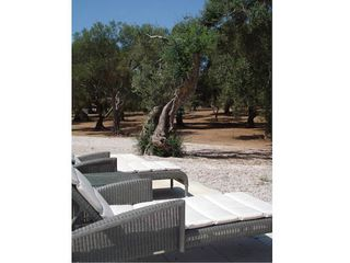 Martano farmhouse photo - Olive grove