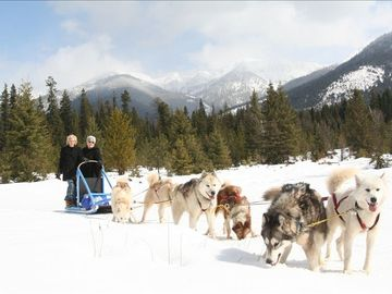 We offer guided dog sled trips in the winter.
