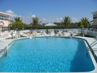 Indian Shores condo photo - Pool