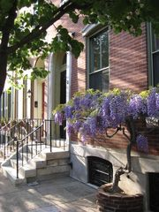 Philadelphia townhome photo - Front step