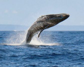 bring your binoculars to watch the humpback whales!