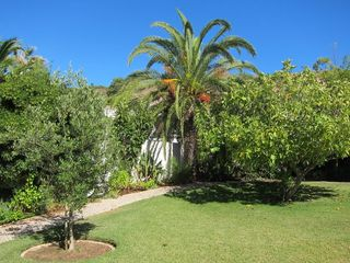 Casa da Figueira's fig, palm and olive trees are part of its tropical gardens. - Praia da Luz Area villa vacation rental photo