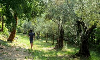 Verona City house photo - our olive grove to the south